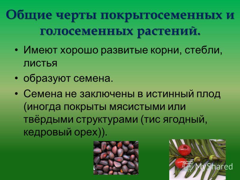 Общие черты покрытосеменных и голосеменных растений. Имеют хорошо развитые корни, стебли, листья образуют семена. Семена не заключены в истинный плод (иногда покрыты мясистыми или твёрдыми структурами (тис ягодный, кедровый орех)).