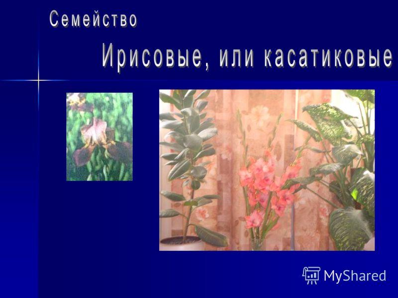 До 3 000 видов, в основном в северном полушарии. В Пермской области более 100 дикорастущих и культивируемых видов. Деревья, кустарники, травы. Листья с прилистниками, простые или сложные. Расположение очерёдное. Цветки обоеполые, правильные, одиночны