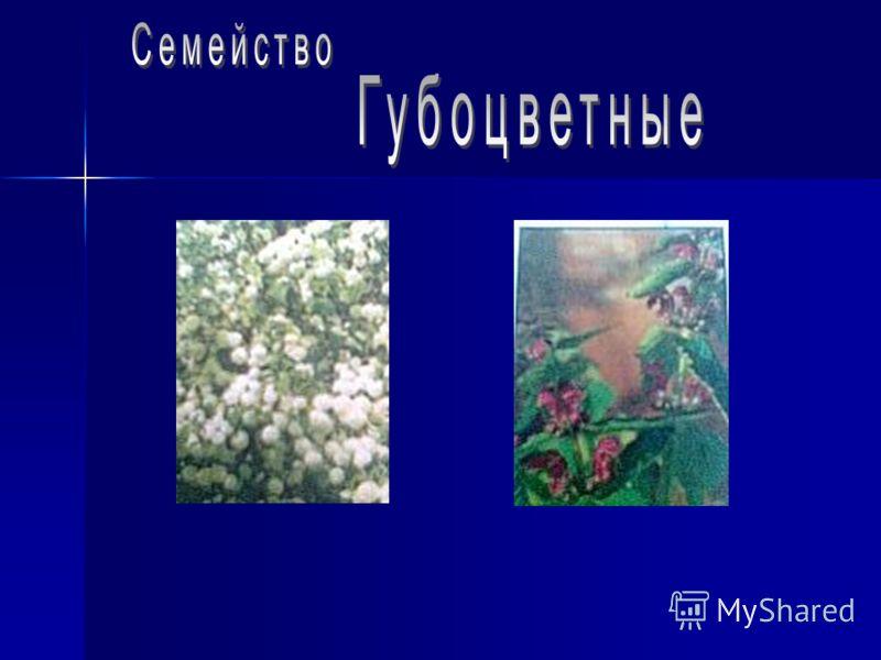Работу выполнила ученица 6а класса Пашкова Анна Шляпники 2008г.