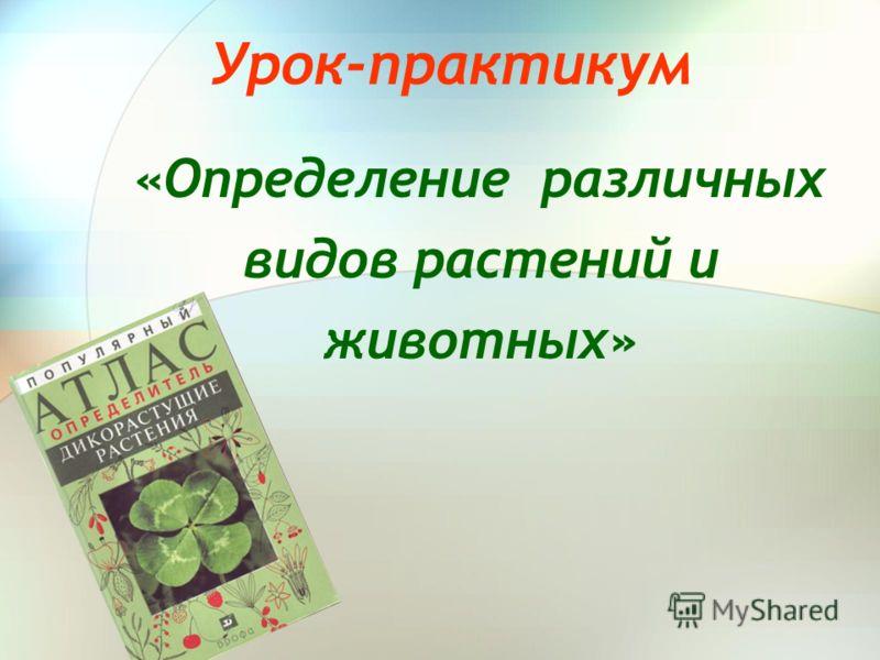 Урок-практикум «Определение различных видов растений и животных»