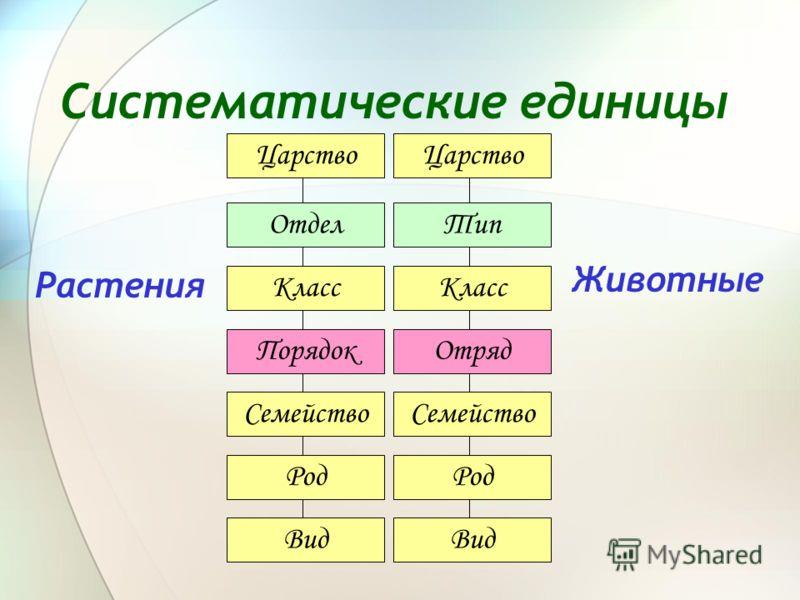 Систематические единицы Растения Животные Царство Отдел Класс Порядок Семейство Род Вид Царство Тип Класс Отряд Семейство Род Вид