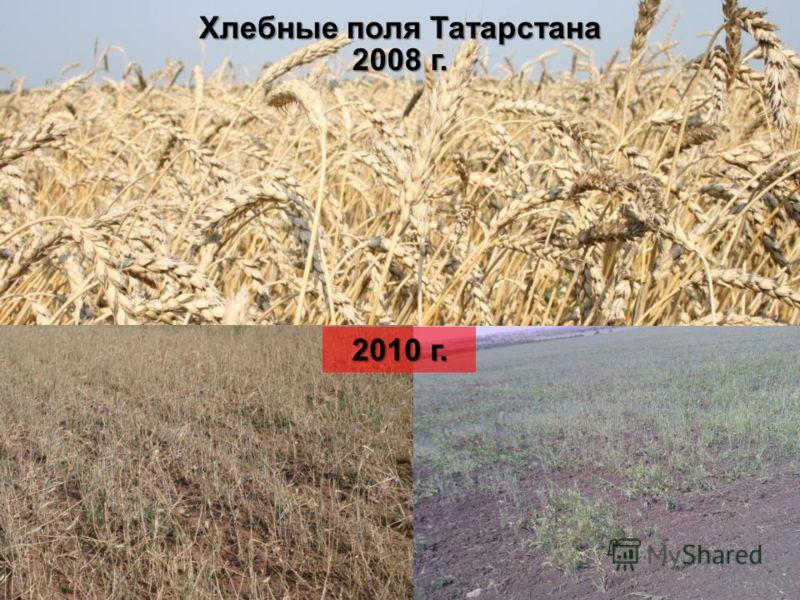 2008 г. 2010 г. Хлебные поля Татарстана