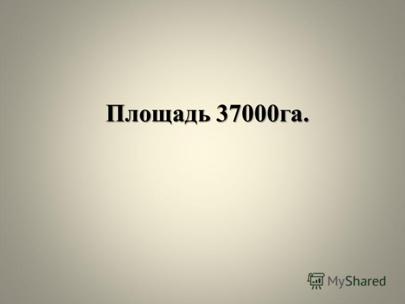 Площадь 37000га.