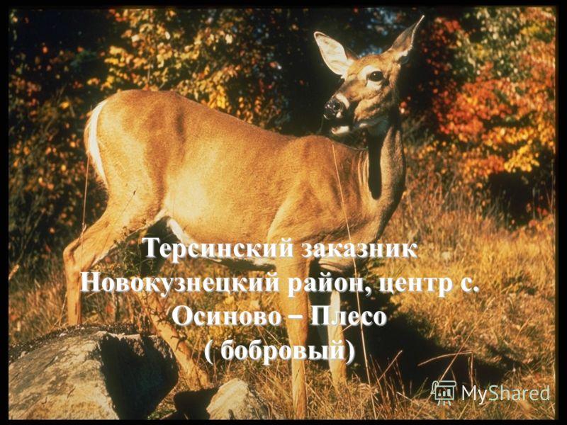 Терсинский заказник Новокузнецкий район, центр с. Осиново – Плесо ( бобровый)
