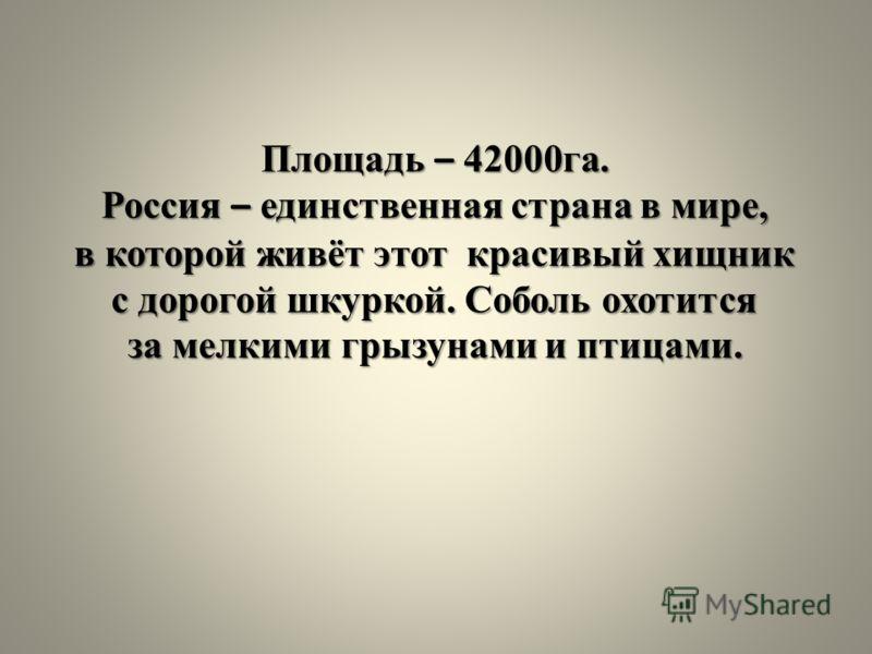Площадь – 42000га. Россия – единственная страна в мире, в которой живёт этот красивый хищник с дорогой шкуркой. Соболь охотится за мелкими грызунами и птицами.