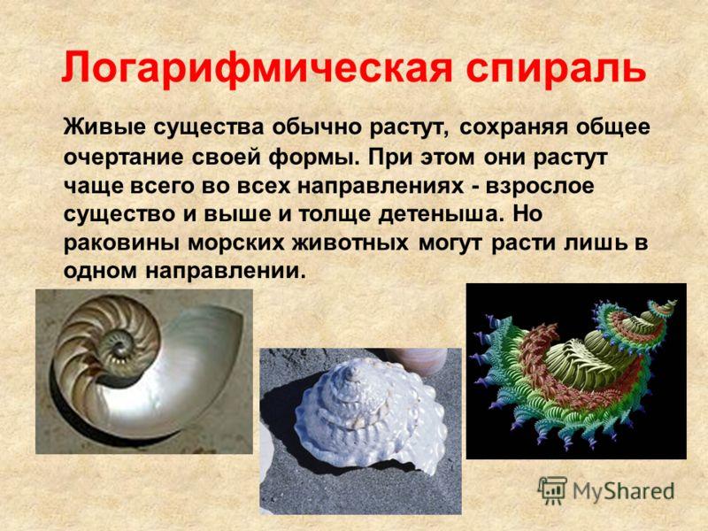 Логарифмическая спираль Живые существа обычно растут, сохраняя общее очертание своей формы. При этом они растут чаще всего во всех направлениях - взрослое существо и выше и толще детеныша. Но раковины морских животных могут расти лишь в одном направл