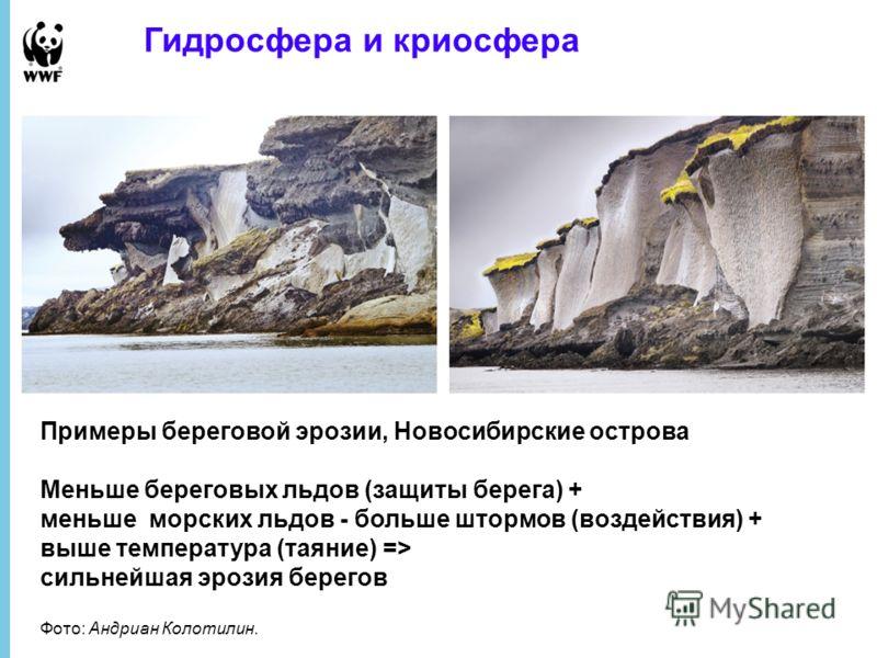 Гидросфера и криосфера Примеры береговой эрозии, Новосибирские острова Меньше береговых льдов (защиты берега) + меньше морских льдов - больше штормов (воздействия) + выше температура (таяние) => сильнейшая эрозия берегов Фото: Андриан Колотилин.