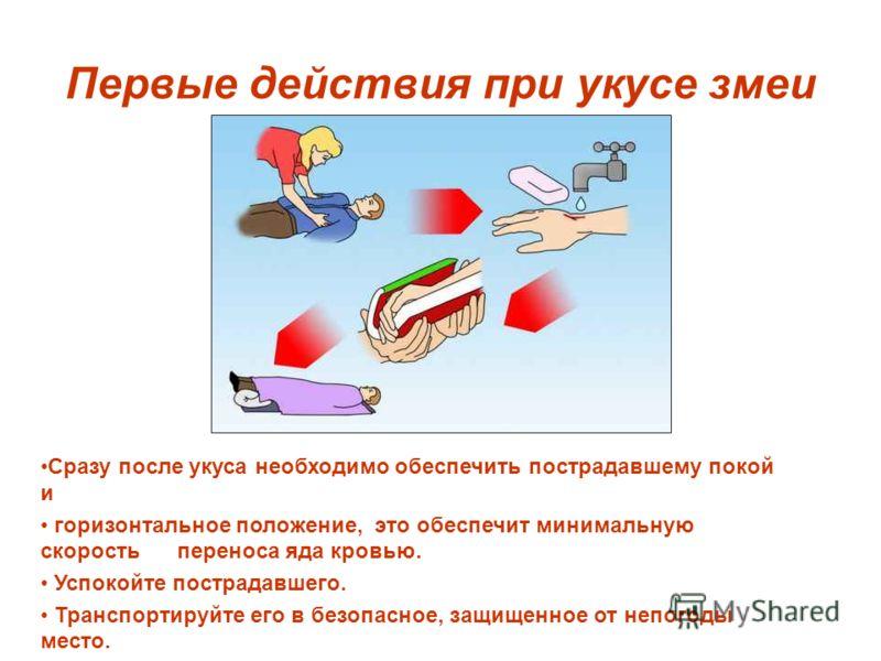 Первые действия при укусе змеи Сразу после укуса необходимо обеспечить пострадавшему покой и горизонтальное положение, это обеспечит минимальную скорость переноса яда кровью. Успокойте пострадавшего. Транспортируйте его в безопасное, защищенное от не
