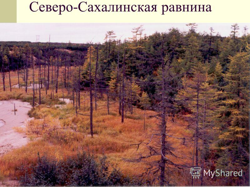 Северо-Сахалинская равнина
