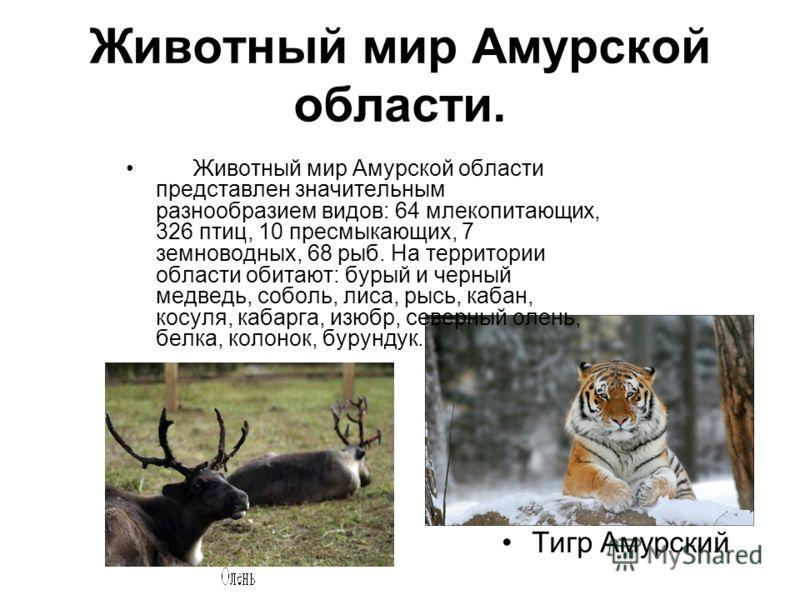 Животный мир Амурской области. Животный мир Амурской области представлен значительным разнообразием видов: 64 млекопитающих, 326 птиц, 10 пресмыкающих, 7 земноводных, 68 рыб. На территории области обитают: бурый и черный медведь, соболь, лиса, рысь,