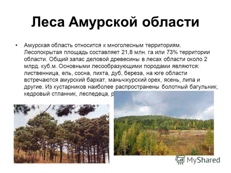 Леса Амурской области Амурская область относится к многолесным территориям. Лесопокрытая площадь составляет 21,8 млн. га или 73% территории области. Общий запас деловой древесины в лесах области около 2 млрд. куб.м. Основными лесообразующими породами