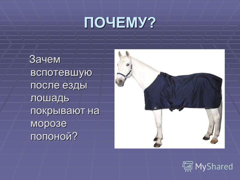 ПОЧЕМУ? Зачем вспотевшую после езды лошадь покрывают на морозе попоной? Зачем вспотевшую после езды лошадь покрывают на морозе попоной?