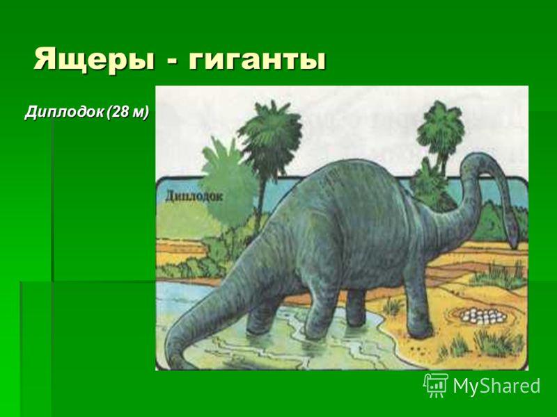 Ящеры - гиганты Диплодок (28 м)