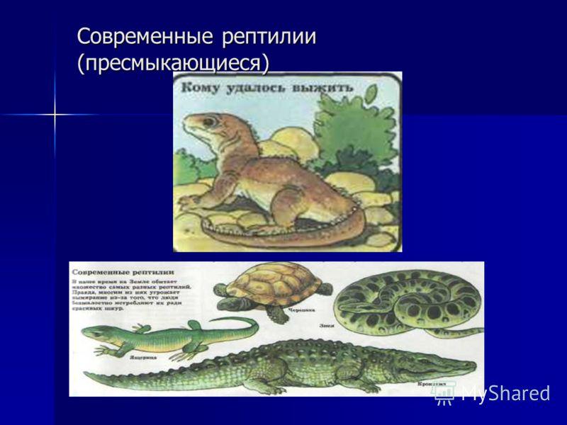 Современные рептилии (пресмыкающиеся)