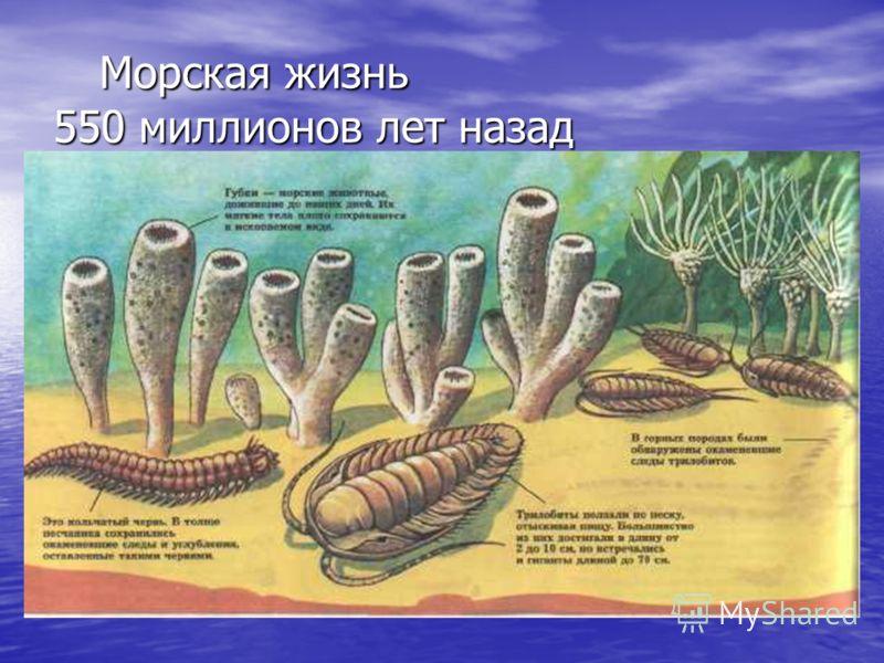 Морская жизнь 550 миллионов лет назад Морская жизнь 550 миллионов лет назад