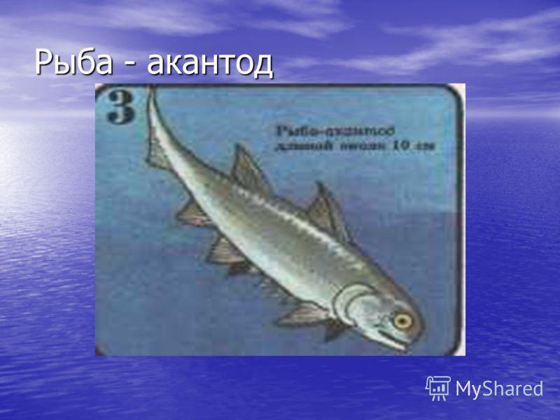 Рыба - акантод