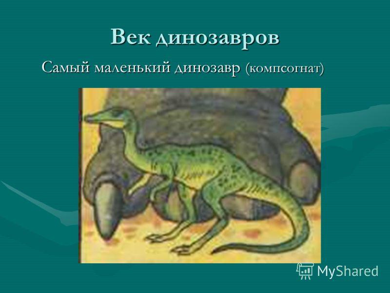Век динозавров Самый маленький динозавр (компсогнат) Самый маленький динозавр (компсогнат)
