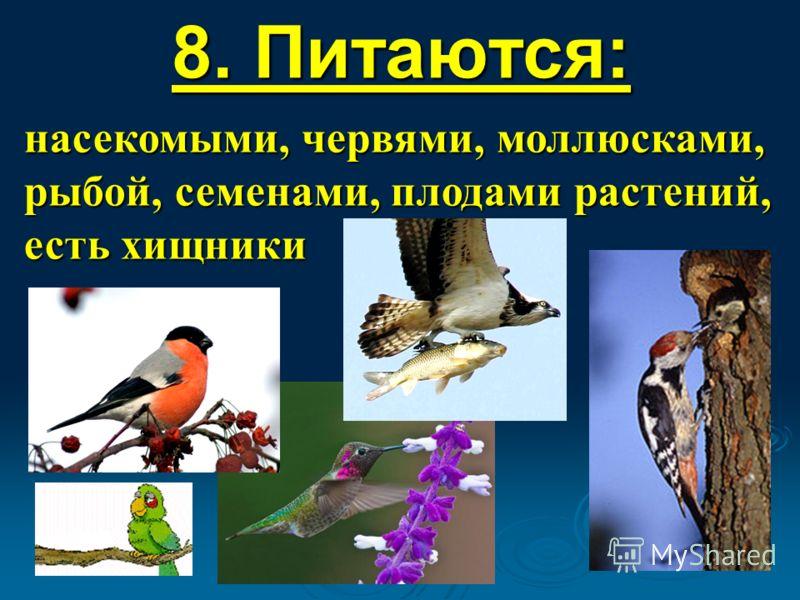 8. Питаются: насекомыми, червями, моллюсками, рыбой, семенами, плодами растений, есть хищники