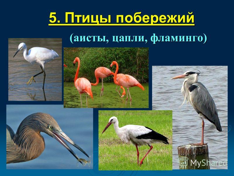 5. Птицы побережий (аисты, цапли, фламинго)