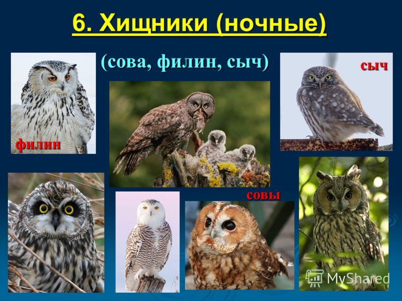 6. Хищники (ночные) (сова, филин, сыч) сыч филин совы