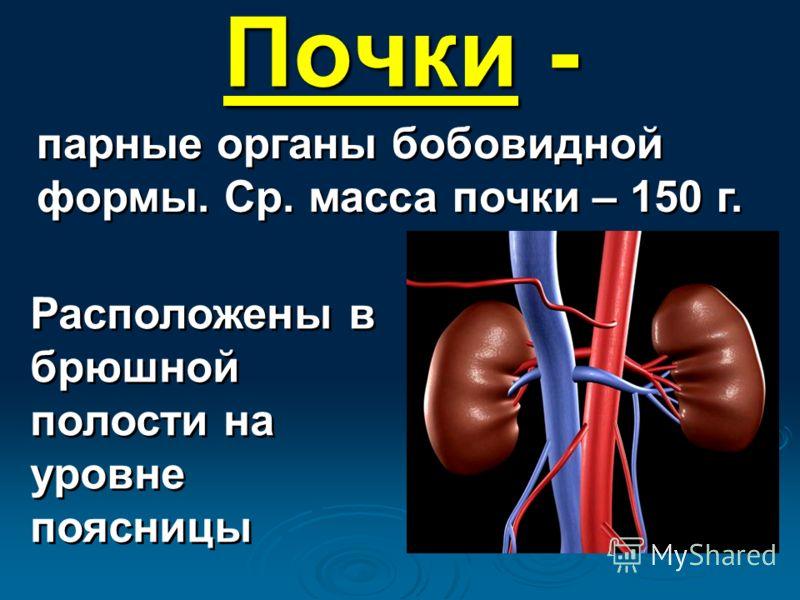 Почки - парные органы бобовидной формы. Ср. масса почки – 150 г. Расположены в брюшной полости на уровне поясницы