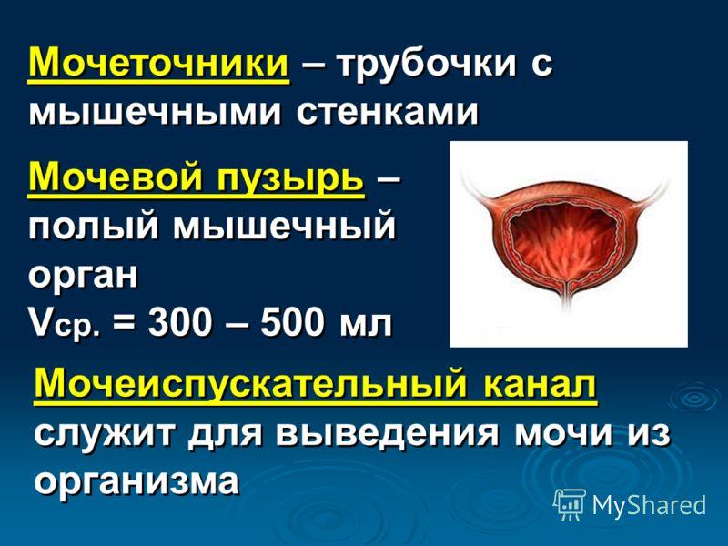 Мочеточники – трубочки с мышечными стенками Мочевой пузырь – полый мышечный орган V ср. = 300 – 500 мл Мочевой пузырь – полый мышечный орган V ср. = 300 – 500 мл Мочеиспускательный канал служит для выведения мочи из организма