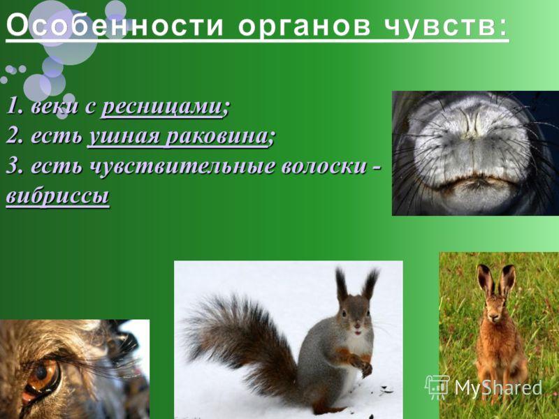 1. веки с ресницами; 2. есть ушная раковина; 3. есть чувствительные волоски - вибриссы