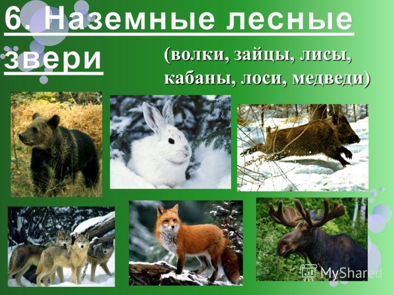 (волки, зайцы, лисы, кабаны, лоси, медведи)