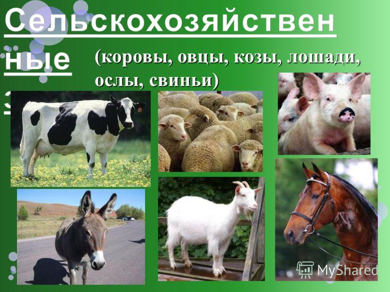 (коровы, овцы, козы, лошади, ослы, свиньи)