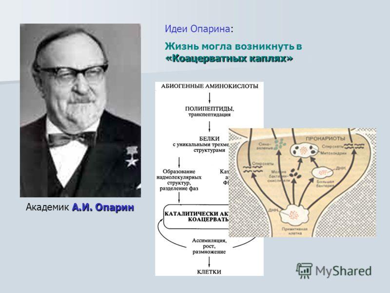А.И. Опарин Академик А.И. Опарин Идеи Опарина: «Коацерватных каплях» Жизнь могла возникнуть в «Коацерватных каплях»