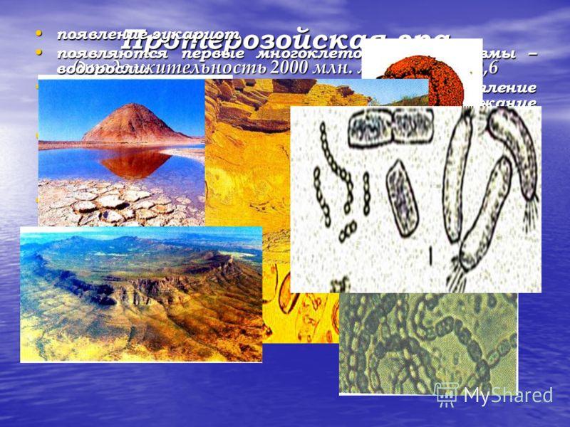 Протерозойская эра (продолжительность 2000 млн. лет, начало: 2,6 млн.лет назад) появление эукариот появление эукариот появляются первые многоклеточные организмы – водоросли. появляются первые многоклеточные организмы – водоросли. в конце протерозоя п