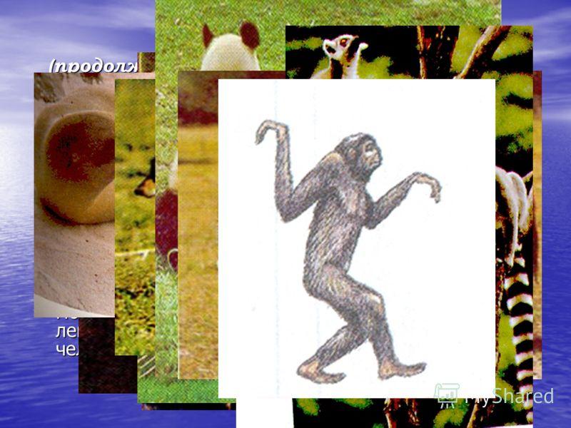 Кайнозойская эра Палеогеновый период (продолжительность 42 млн.лет, начало 66 млн.лет назад) Потепление климата, большая часть территории Европы занята тропическими лесами, в которых преобладают покрытосеменные (лавры, пальмы, магнолии, секвойи) Поте