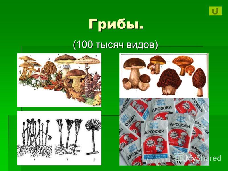 Грибы. (100 тысяч видов)