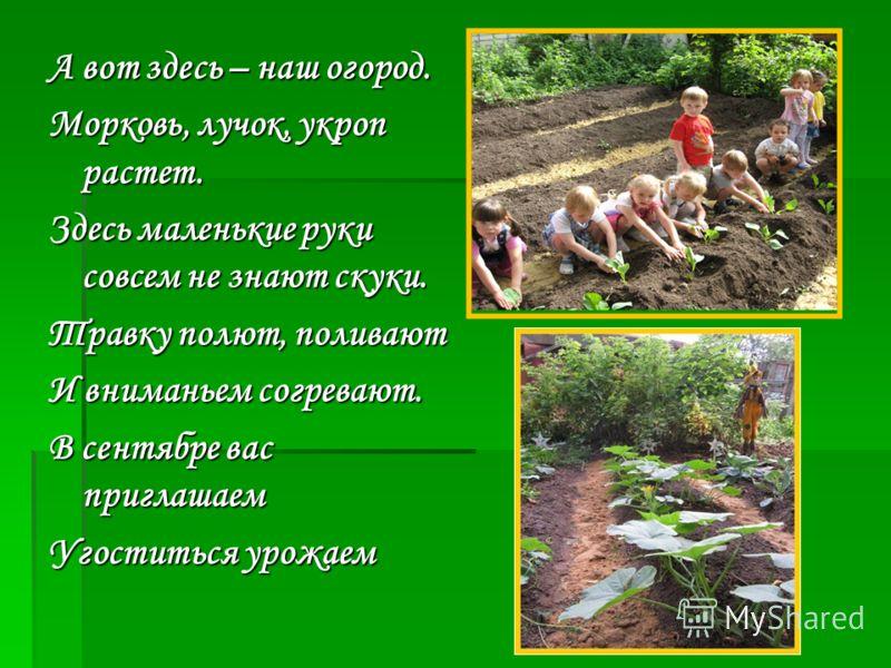 А вот здесь – наш огород. Морковь, лучок, укроп растет. Здесь маленькие руки совсем не знают скуки. Травку полют, поливают И вниманьем согревают. В сентябре вас приглашаем Угоститься урожаем