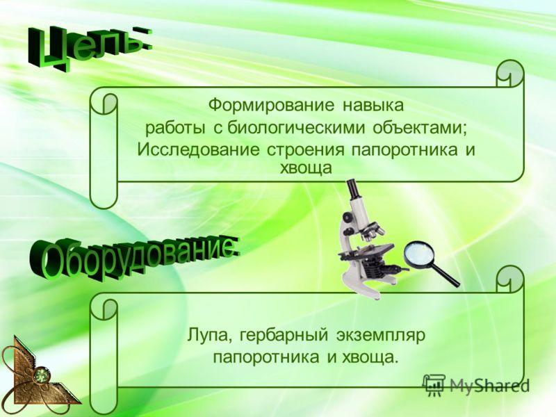 Формирование навыка работы с биологическими объектами; Исследование строения папоротника и хвоща Лупа, гербарный экземпляр папоротника и хвоща.