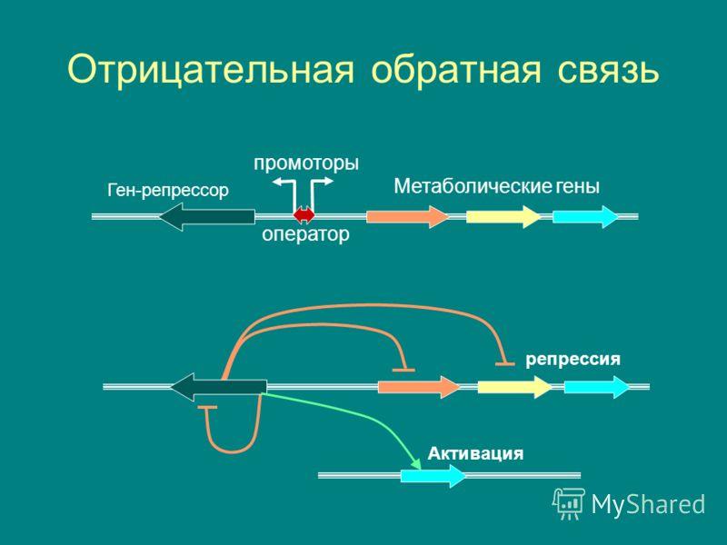 Отрицательная обратная связь промоторы оператор Ген-репрессор Метаболические гены Активация репрессия