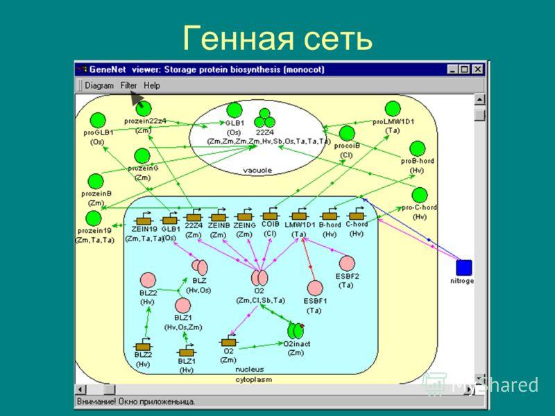 Генная сеть