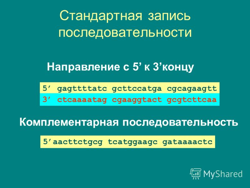 Стандартная запись последовательности Направление с 5 к 3концу 5 gagttttatc gcttccatga cgcagaagtt Комплементарная последовательность 3 ctcaaaatag cgaaggtact gcgtcttcaa 5aacttctgcg tcatggaagc gataaaactc
