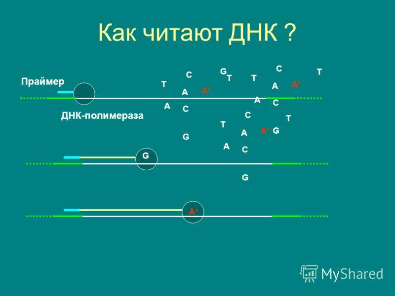 Как читают ДНК ? Праймер ДНК-полимераза A C G T A* A C G T A C G T A C T A C G T A C T G
