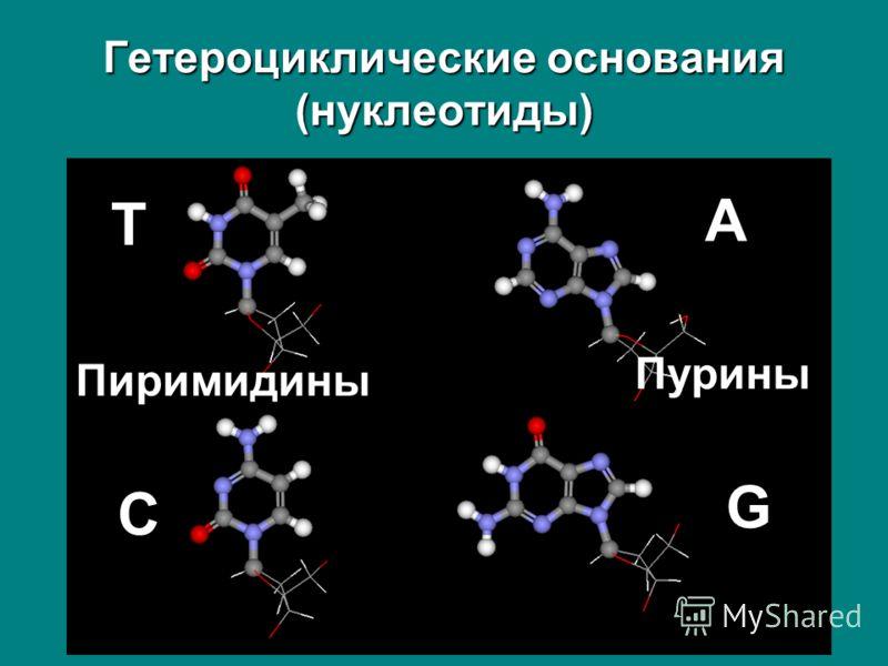 Гетероциклические основания (нуклеотиды) T A C G Пурины Пиримидины