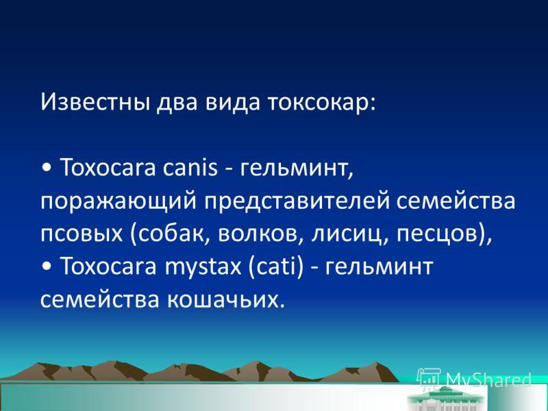 Известны два вида токсокар: Toxocara canis - гельминт, поражающий представителей семейства псовых (собак, волков, лисиц, песцов), Тохосаrа mystax (cati) - гельминт семейства кошачьих.