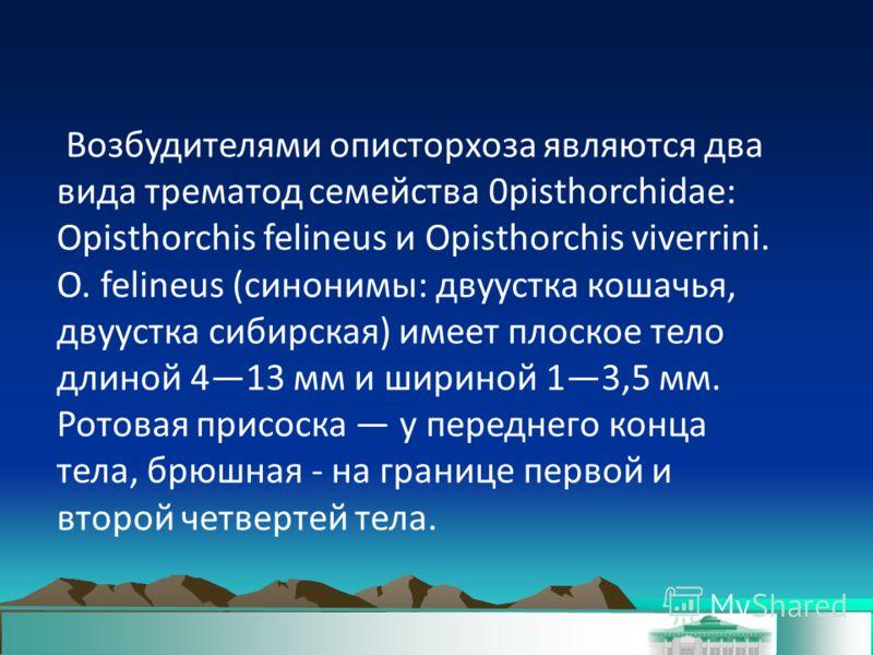 Возбудителями описторхоза являются два вида трематод семейства 0pisthorchidae: Opisthorchis felineus и Opisthorchis viverrini. О. felineus (синонимы: двуустка кошачья, двуустка сибирская) имеет плоское тело длиной 413 мм и шириной 13,5 мм. Ротовая пр