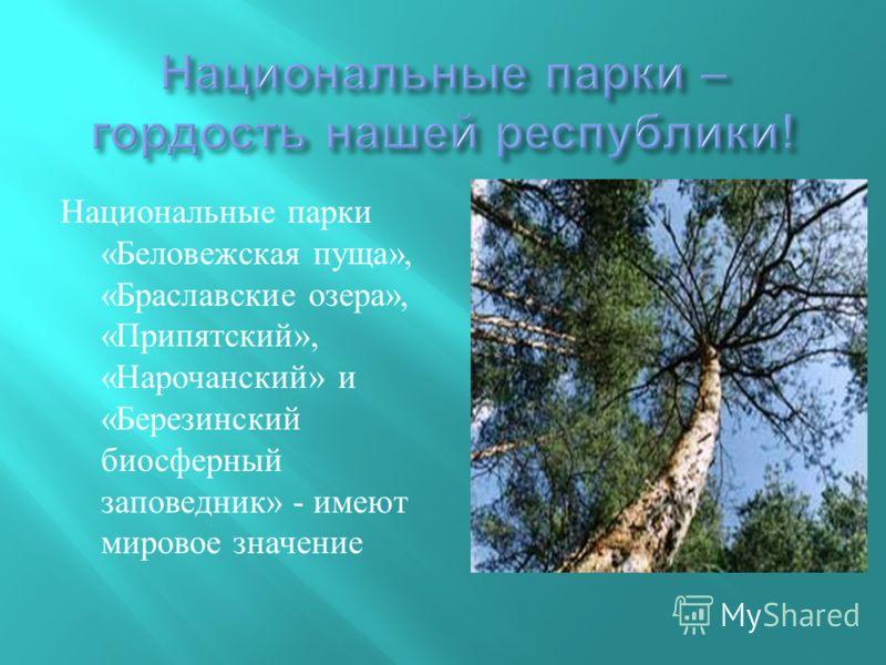 Национальные парки « Беловежская пуща », « Браславские озера », « Припятский », « Нарочанский » и « Березинский биосферный заповедник » - имеют мировое значение