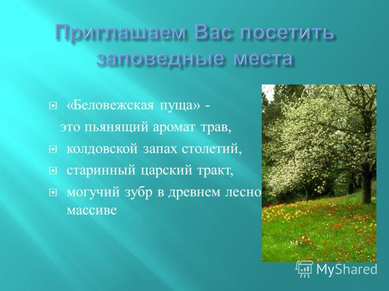 « Беловежская пуща » - это пьянящий аромат трав, колдовской запах столетий, старинный царский тракт, могучий зубр в древнем лесном массиве