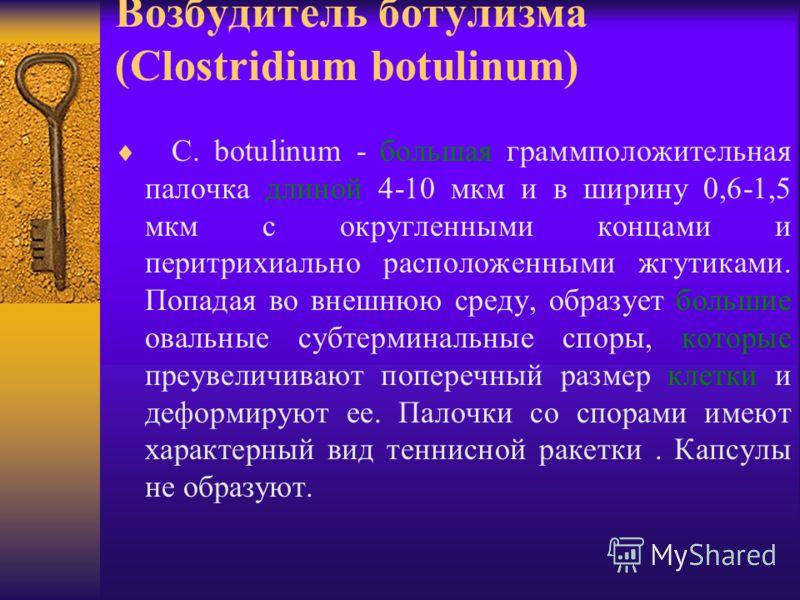 Возбудитель ботулизма (Clostridium botulinum) C. botulinum - большая граммположительная палочка длиной 4-10 мкм и в ширину 0,6-1,5 мкм с округленными концами и перитрихиально расположенными жгутиками. Попадая во внешнюю среду, образует большие овальн