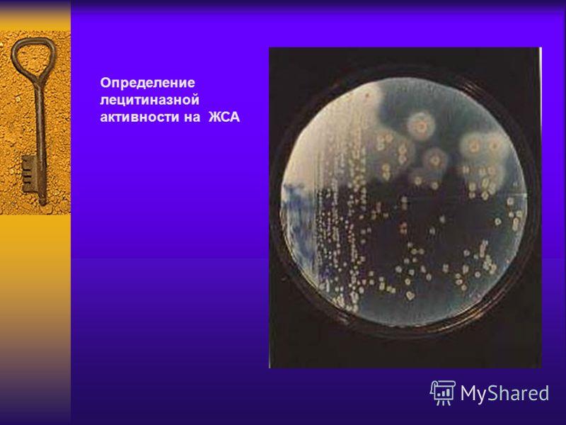 Определение лецитиназной активности на ЖСА