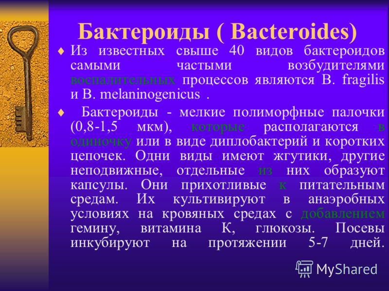 Бактероиды ( Bacteroides) Из известных свыше 40 видов бактероидов самыми частыми возбудителями воспалительных процессов являются B. fragilis и B. melaninogenicus. Бактероиды - мелкие полиморфные палочки (0,8-1,5 мкм), которые располагаются в одиночку