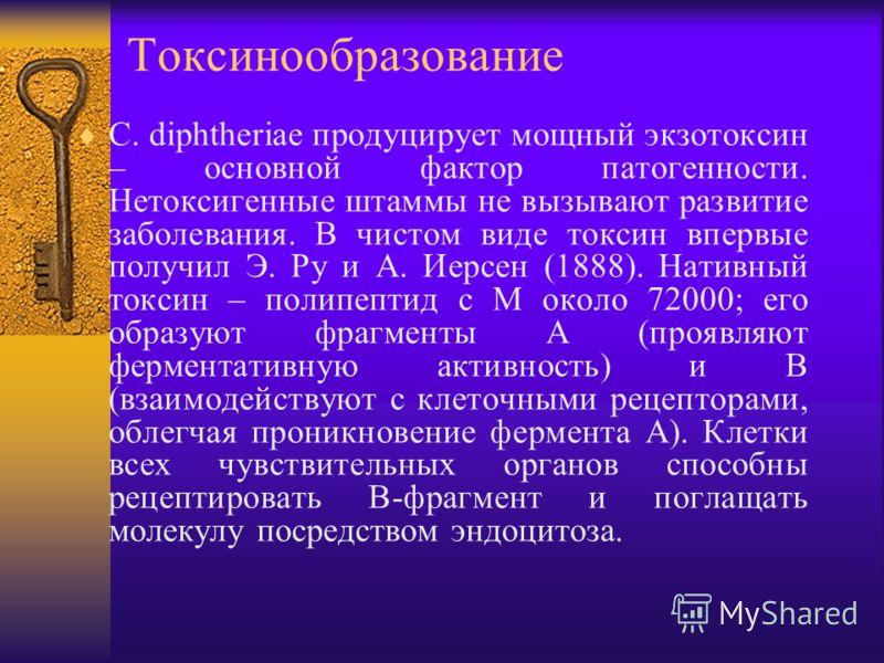 Токсинообразование C. diphtheriae продуцирует мощный экзотоксин – основной фактор патогенности. Нетоксигенные штаммы не вызывают развитие заболевания. В чистом виде токсин впервые получил Э. Ру и А. Иерсен (1888). Нативный токсин – полипептид с М око