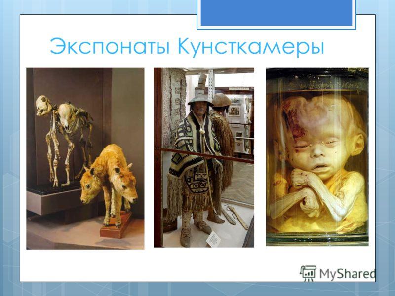 Экспонаты Кунсткамеры