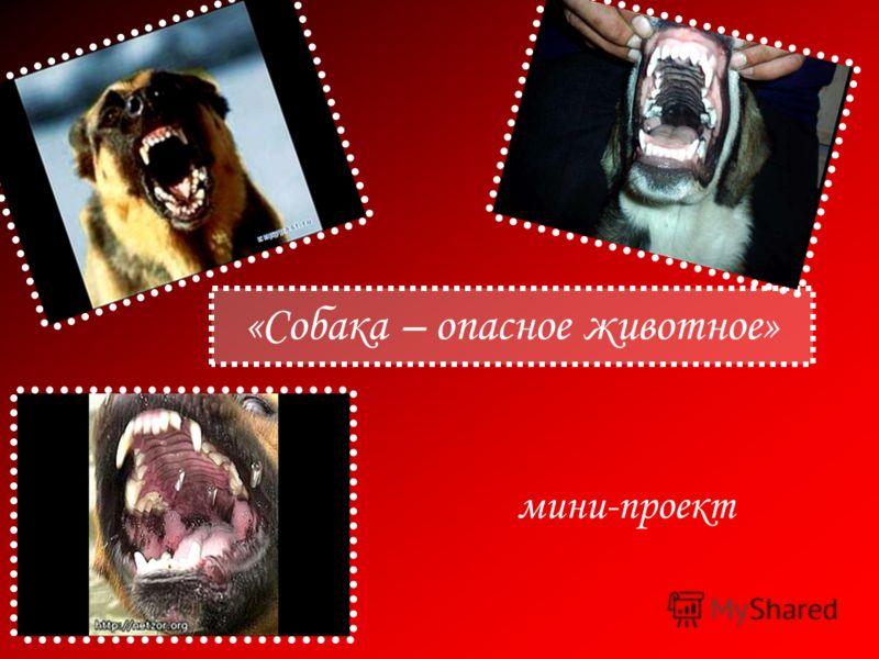 «Собака – опасное животное» мини-проект